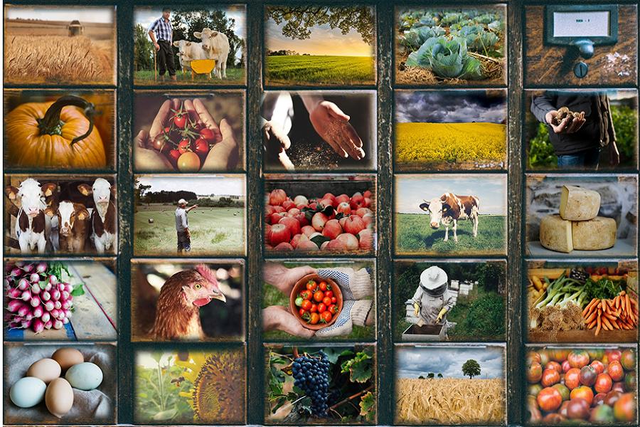 image Montage_acteurs_agriculture__bis.png (1.3MB) Lien vers: ActeursWallons
